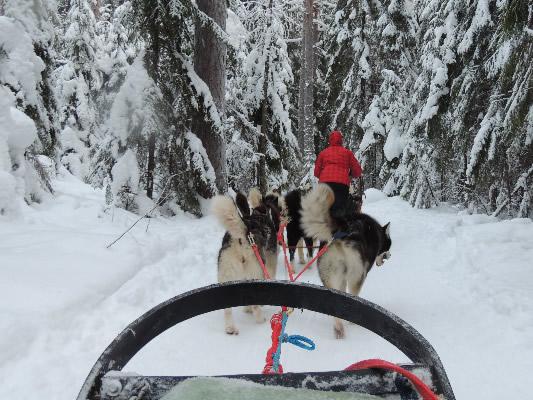 Фотогалерея: Карельский эксклюзив (сафари на снегоходах и собачьих упряжках) 2018г.