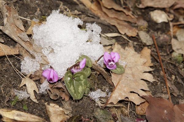 Фотогалерея: Геотермальные источники в Адыгее - 7. Осень-зима-весна 2019/2020