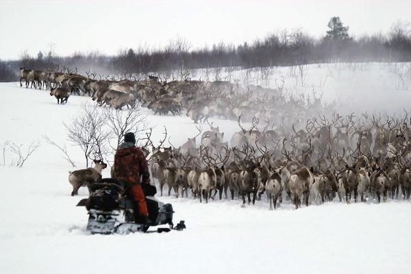 Фотогалерея: Планета Кольский. 2018