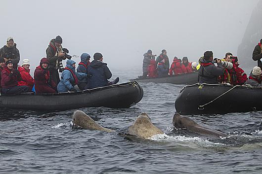Фотогалерея: Круиз по Охотскому морю. 2017г.