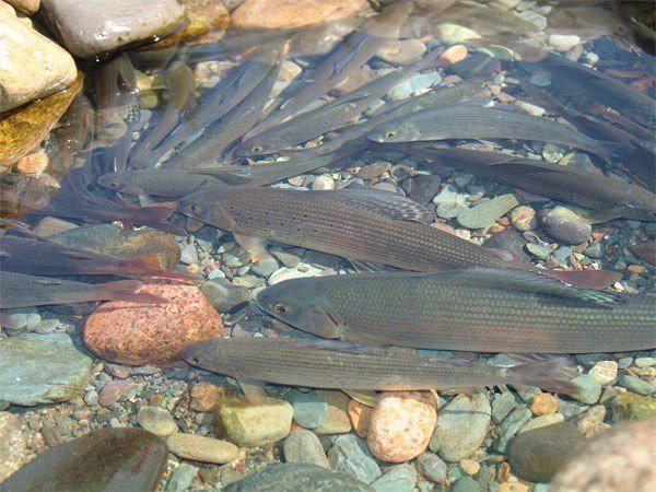 Фотогалерея: Рыбалка и охота в Магаданской области