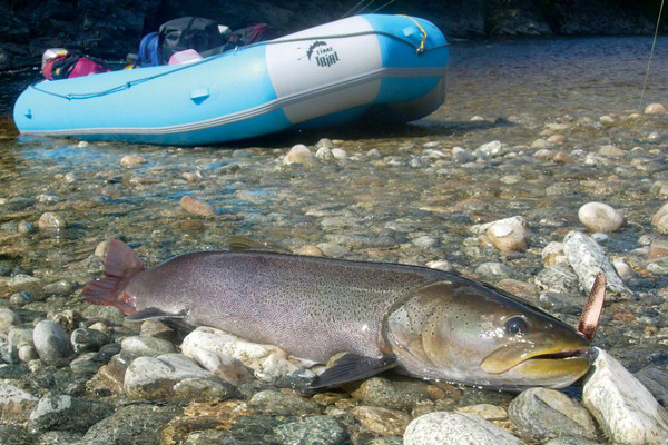 Фотогалерея: Рыбалка на Плато Путорана, Енисей, Таймыр.