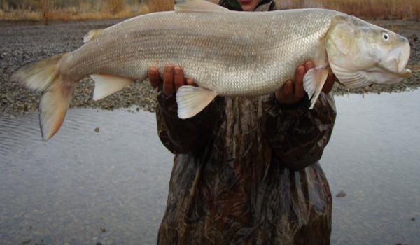 Фотогалерея: Рыбалка в Магадане