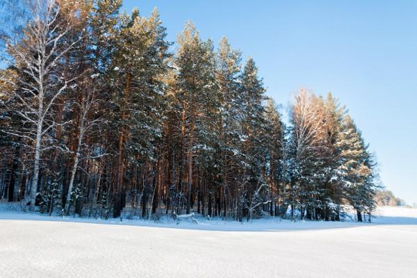 Фотогалерея: Снежный Крака - 3 дня. 2018-2019